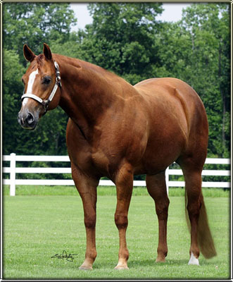 Quarter horse mare and foal 50267 dont forget to share your opinion using the comment form below, height: 916 pixels
