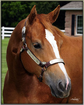 quarter horse head pictures - photo #39